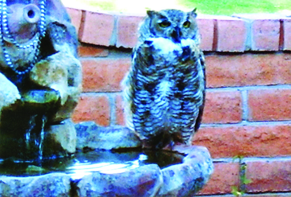 Ingrid Billinger has a friend (owl) stop by every day. She enjoys the visit!