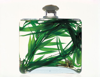 Bottle containing grass and liquid