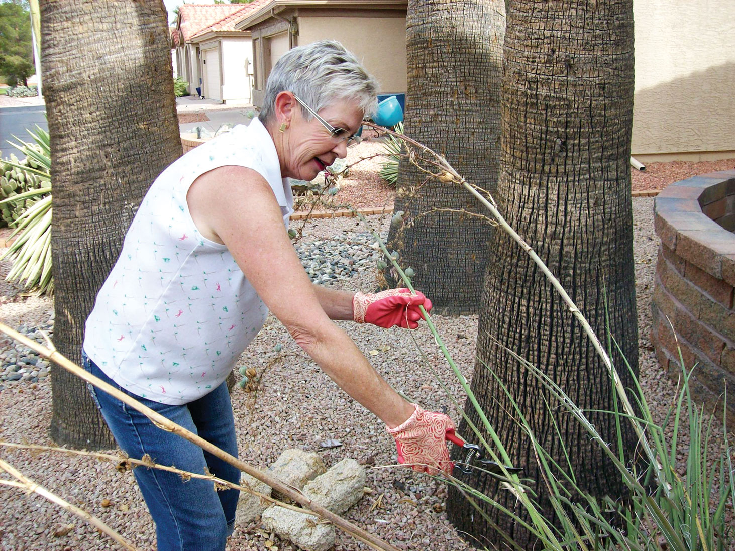 President Alice Whistler trimming her Red Yucca. This plant produces a round star-like seedpod after blooming. The small black seeds will scatter in the wind, so Alice trims them or she would have a yard filled with Yucca.