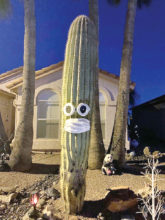 The saguaro on Oakmont is social distancing, too! (Photo by Sally Klebba)