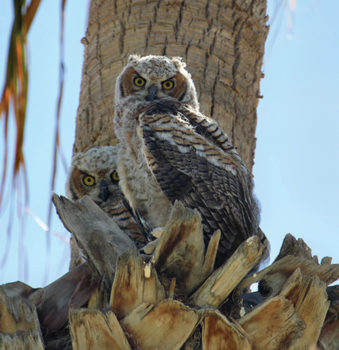 The nest of a family of owls in SunBird