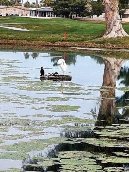 Birds on number 17 pond